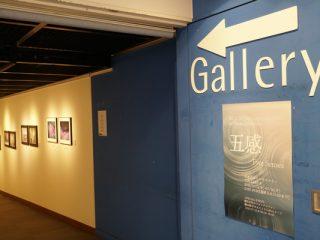 今日は「みなとみらいギャラリー」へ|Bell Wood Laboratory 第1回グループ展 「五感」