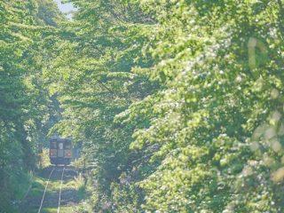 α Universe| 鉄道写真家・山下大祐氏「鉄道写真撮影におけるα7R IIIのポテンシャルの高さ」の記事をはじめ2つの記事が更新!