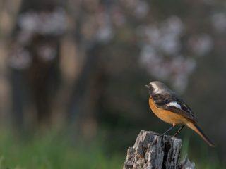 α Universe| αで野鳥が撮影できるの? と疑問をお持ちの方へ、野鳥カメラマン 山田 芳文 氏 × α7R III