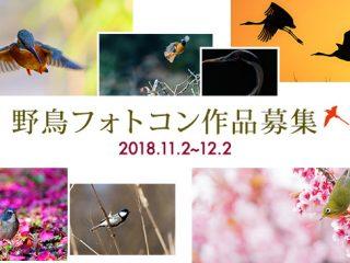 お知らせ|ソニー 野鳥フォトコン作品募集 2018.11.2~12.2