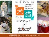 ソニーオープンフォトコン| 犬・猫フォトコンテスト × peco(ペコ)