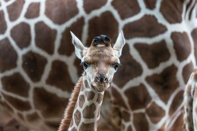 坂井田富三の写真講座 動物園撮影講座