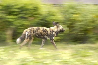 小川晃代の写真講座 よこはま動物園ズーラシアで動物撮影
