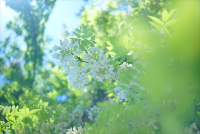 山本まりこの写真講座 エアリーフォトセミナー「単焦点レンズでお花を柔らかい空気感で撮影する」 初級 はじめてコース